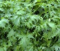 Japanese greens